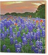 Springtime Sunset In Texas - Texas Bluebonnet Wildflowers Landscape Flowers Paintbrush Wood Print by Jon Holiday