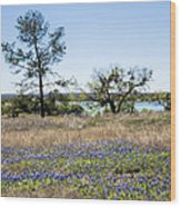 Springtime Texas Bluebonnets Naturalized Wood Print