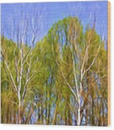 Springtime Trees Wood Print