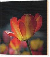 Springtime Tulips Wood Print