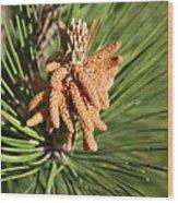 Sprintime Pine Wood Print