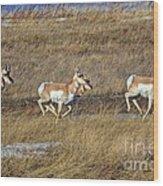 Sprinting Pronghorn Wood Print
