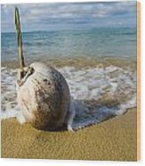 Sprouting Coconut Washed Up On Beach Wood Print by Naki Kouyioumtzis