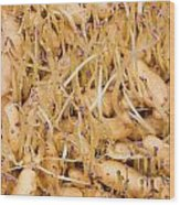 Sprouting Russian Banana Fingerling Seed Potatoes Wood Print