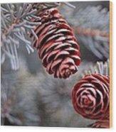 Spruce Cone Closeup II Wood Print