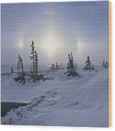 Spruce Forest With Sundogs Hudson Bay Wood Print