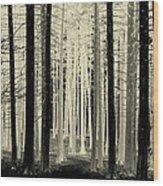 Spruce Magic Wood Print