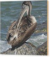 Sprucing Pelican Wood Print