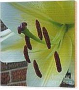 Sq Lily Morning Wood Print