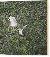 Squabbling Birds Wood Print