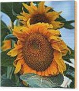 Squamish Sunflower Portrait Wood Print