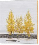 Square Diptych Tree 12-7693 Set 1 Of 2 Wood Print