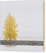 Square Diptych Tree 12-7693 Set 2 Of 2 Wood Print