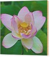 Square Lotus Flower Wood Print