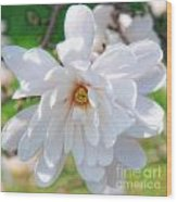 Square Magnolia Wood Print