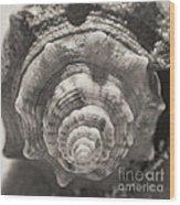 Square Sepia Sea Shell Wood Print
