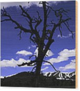 Squigly Tree Wood Print