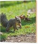 Squirrel 1 Wood Print
