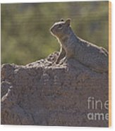 Squirrel   #8424 Wood Print