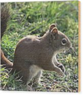 Squirrel And His Sunflower Seed Wood Print