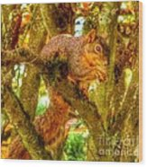 Squirrel Away Acorn Wood Print