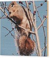 Squirrel Berry Wood Print