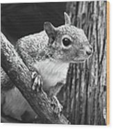 Squirrel Black And White Wood Print