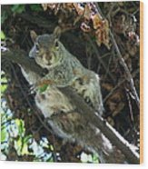 Squirrel By Nest Wood Print