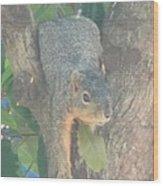 Squirrel Chillin Wood Print