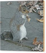 Squirrel Chomping On Bread Wood Print