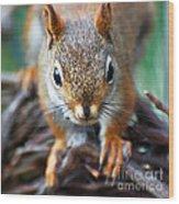 Squirrel Close-up Wood Print