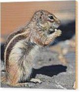 Squirrel Con Queso Wood Print