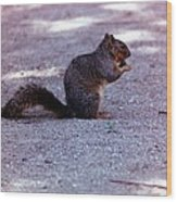 Squirrel Eating A Nut Wood Print