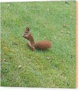 Squirrel Eating Nuts Wood Print