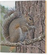 Squirrel Finds A Treat Wood Print