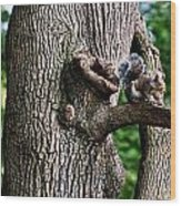 Squirrel Guarding Watering Knot Wood Print