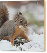 Squirrel In Snow Wood Print
