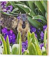 Squirrel In The Botanic Garden Wood Print
