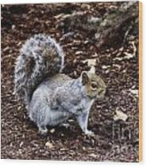 Squirrel In The Park-boston  V6 Wood Print