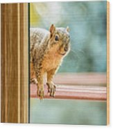 Squirrel In The Window Wood Print