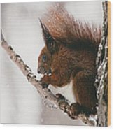 Squirrel In Winter Wood Print