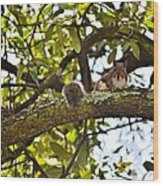 Squirrel On A Branch Wood Print