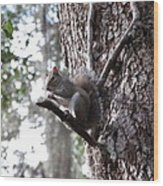 Squirrel On A Stick Wood Print