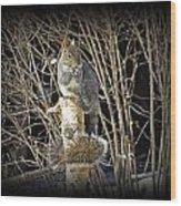 Squirrel On Birch Post Wood Print