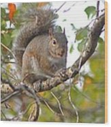 Squirrel On Branch Wood Print