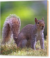 Squirrel On Grass Wood Print
