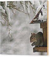 Squirrel On The Bird Feeder Wood Print