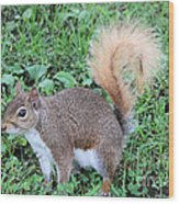 Squirrel On The Ground Wood Print