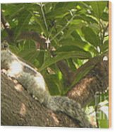 Squirrel On The Tree Wood Print