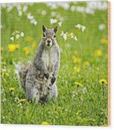 Squirrel Patrol Wood Print
